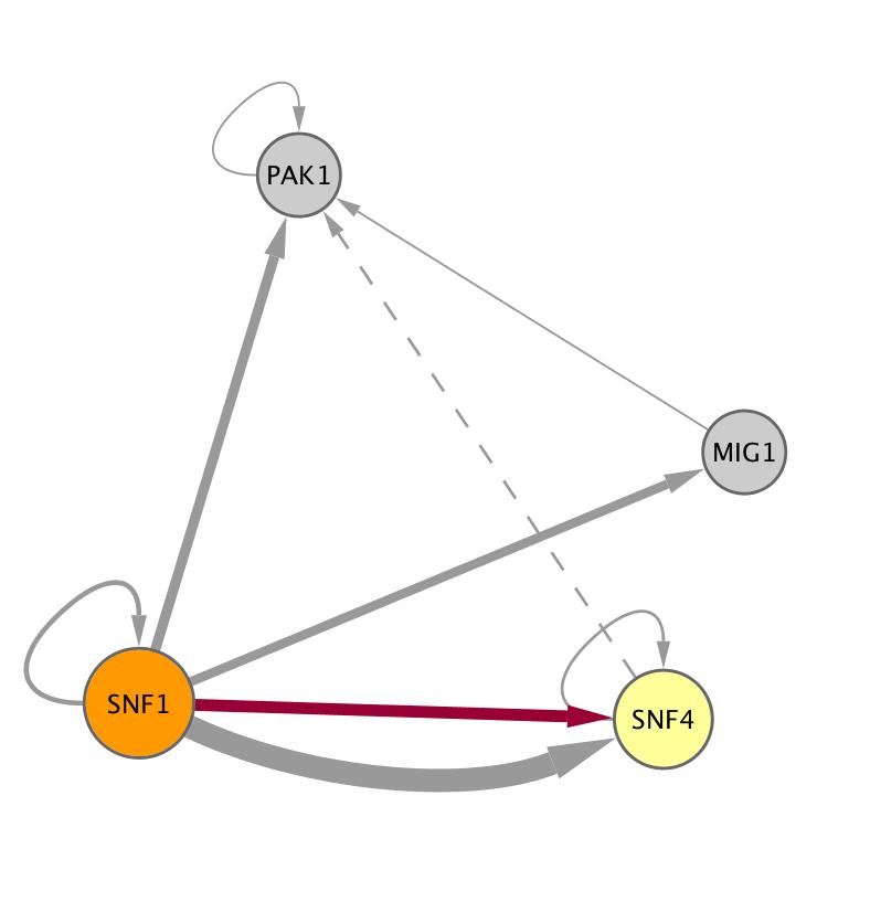 SNF1 (YDR477W)