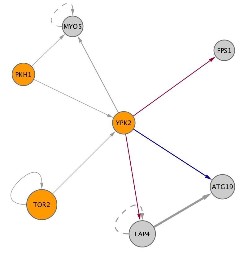 YPK2 (YMR104C)